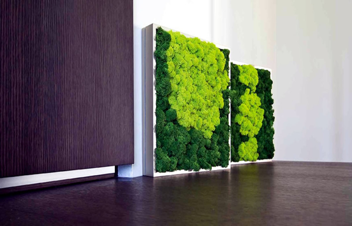 Какой мох применяют в декоративных целях для озеленения офисов, квартир, кафе и ресторанов?
