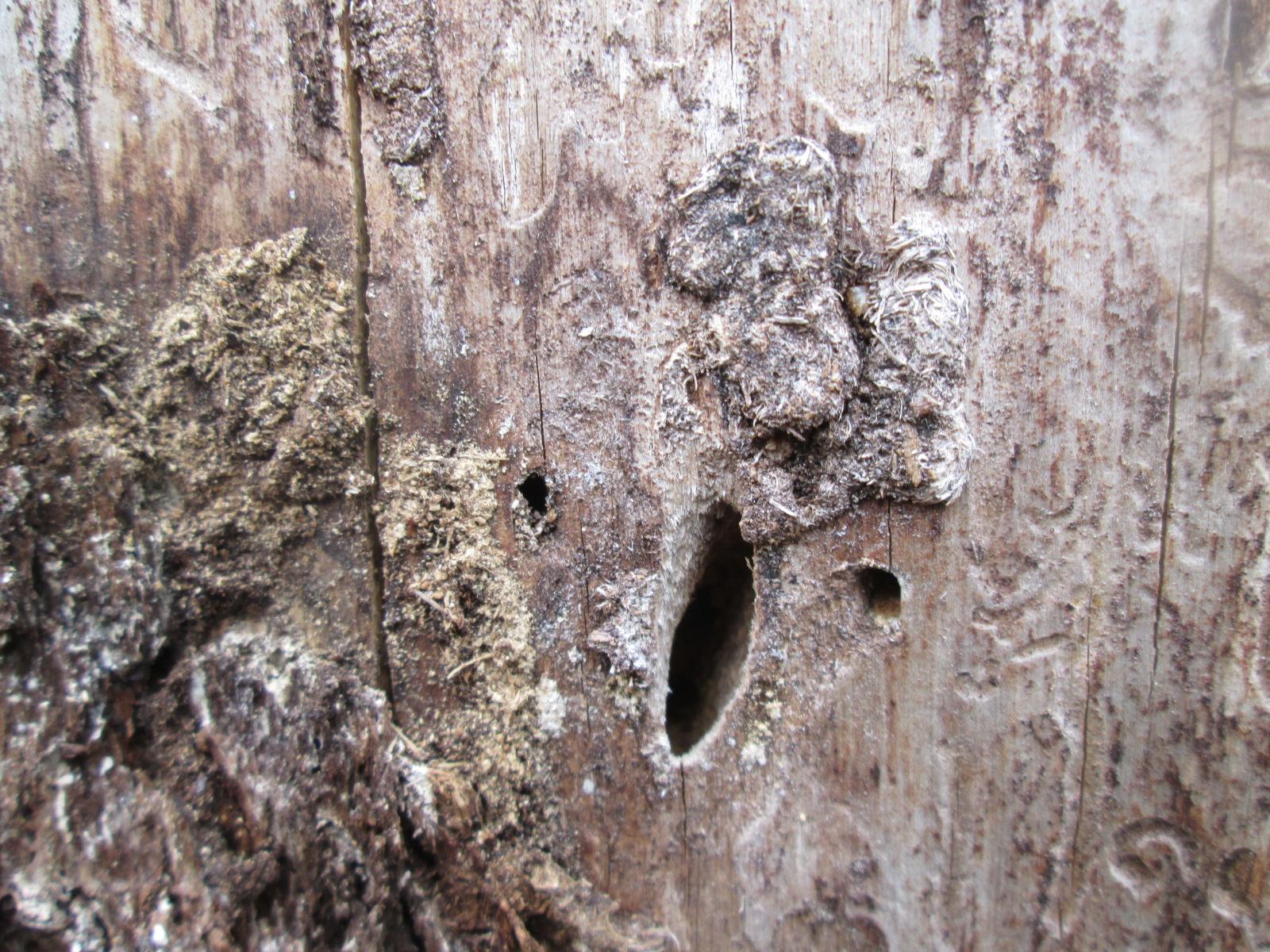 Три железных варианта защиты своего деревянного дома от насекомых-древоточцев